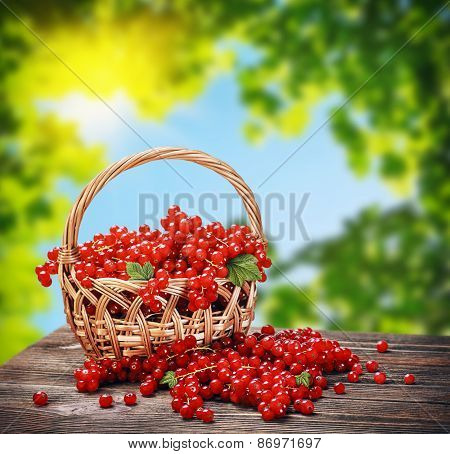 Fresh Berries Red Currant In A Basket