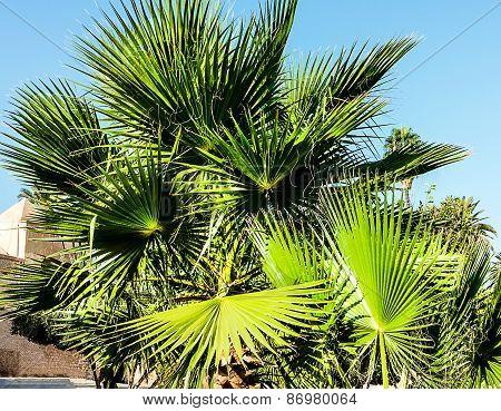 Palm trees on clear blue sky