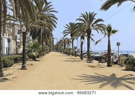 Palm Alley On The Waterfront Calella