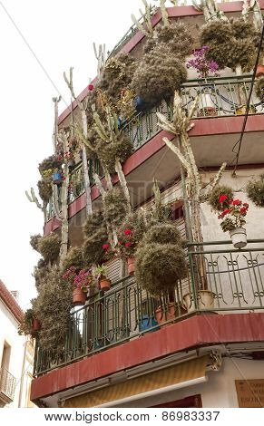 House In Calella With Lots Of Flowers And Cacti
