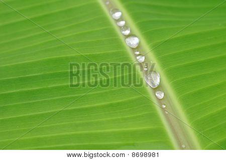 Banana Leaf And Water Drop