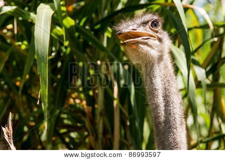 ostrich looking meaningful