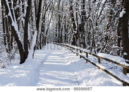 A winter walkway