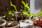 image of seed  - Agriculture Seeding Plant seed growing concept selective focus - JPG