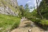 image of ravines  - Homole Ravine in Pieniny mountains - JPG