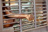 pic of orangutan  - Old Orangutan hand in the old grunge cage - JPG