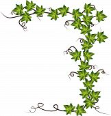 stock photo of condolence  - Green colorful ivy for you - JPG