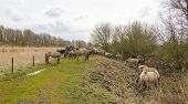 image of herd horses  - Herd of horses in nature in a cloudy spring - JPG