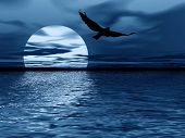 picture of blue moon  - abstraction night landscape with moon ocean and bird - JPG