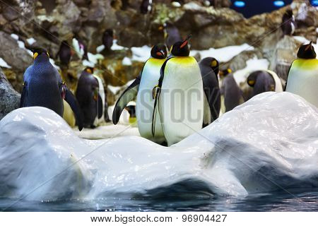 Penguins in park at Tenerife Canary - animal background