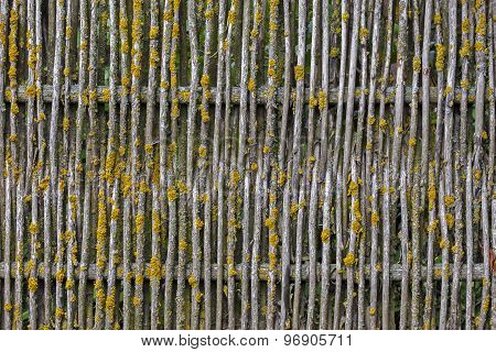 Old Wooden Mossy Fence Background