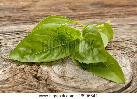 Green basil isolated on the wooden background