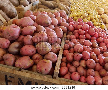 Potato Variety In Wooden Bins