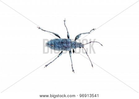 Blue Bug On A White Background