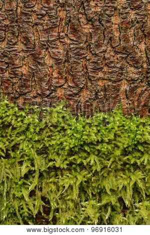 Moss And Tree Bark Texture