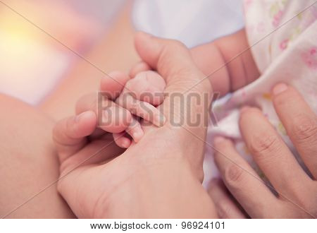 New Born Baby Hand In Mom Palm.