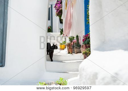 Black Cat On The Stairs Of The House