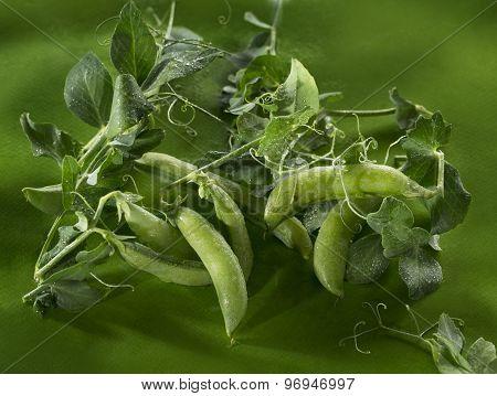 Green Peas Art