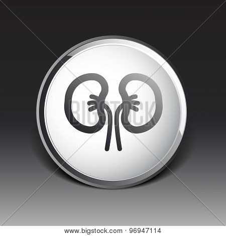 kidney icon isolated human two vein white medical