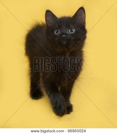 Small Fluffy Black Kitten Going On Yellow