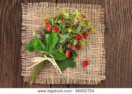 Wild Strawberry on Vintage Background