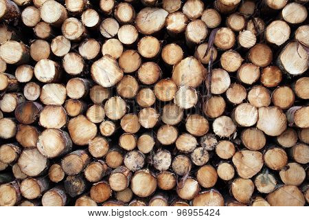 Pine trees logs background
