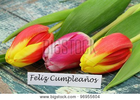 Feliz cumpleanos (Happy birthday in Spanish) card with colorful tulips