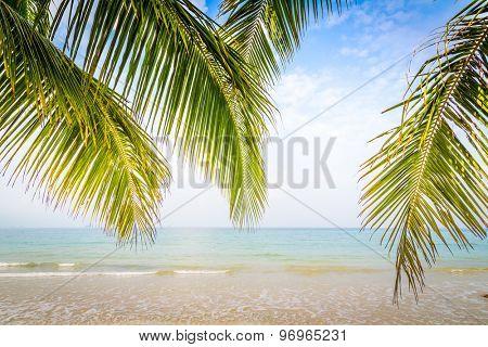 Palm leaf and tropical beach
