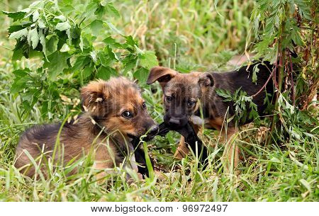 Two cheerful and sweet puppy playing in the field.