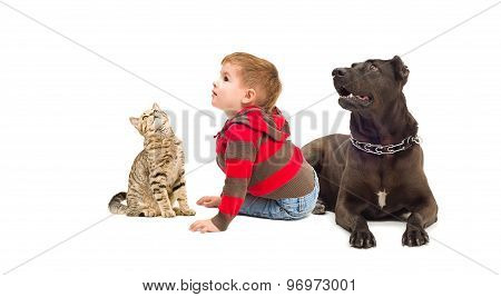 Curious child, a dog and a cat