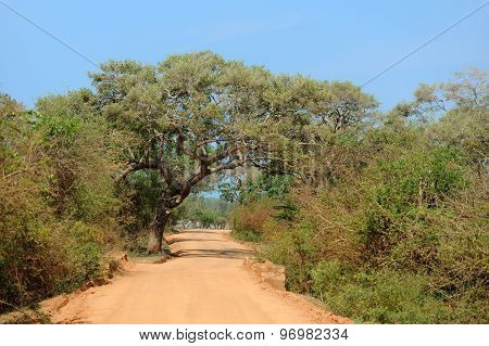 Road To The National Reserve