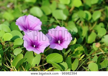 Violet Flowers And Green Grass On The Beach