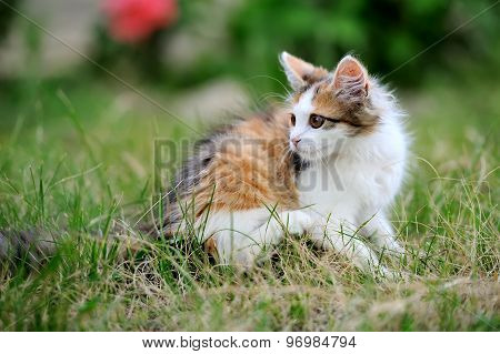Young Cat