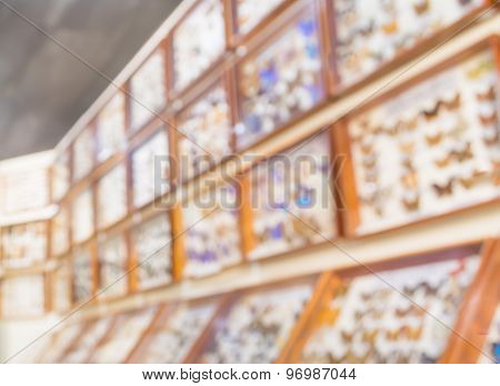 Blur Image Of Collection Of Beetle Butterfly Wasps And Insects Gallery In The Room.