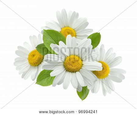 Chamomile Group Leaves Isolated On White