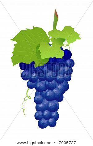 Grape cluster isolated on white