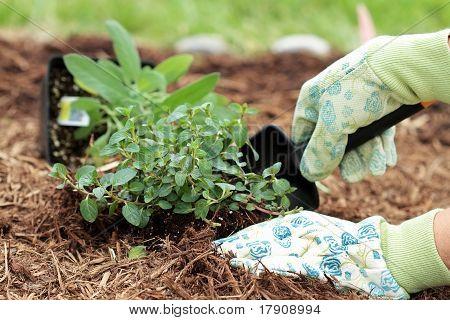 Plantación de hierbas