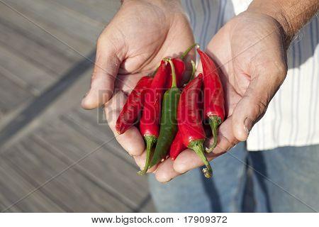 Farmer Holding Chili Pepper