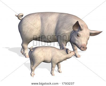 Mother Pig With Piglet