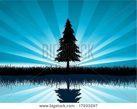 Solitary fir tree