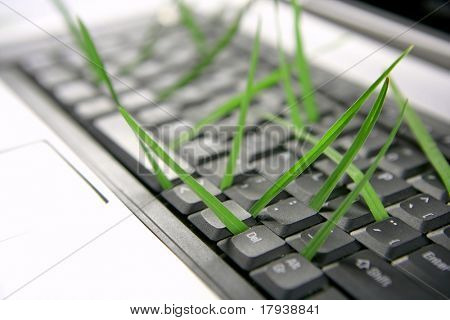 Grass growing from computer keyboard, ecology metaphor
