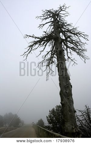 Dried old tree on a foggy road, fog giving a mystery environment