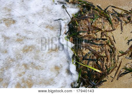 Algen uit Middellandse-Zeegebied, groene zeewier in het water van de kustlijn