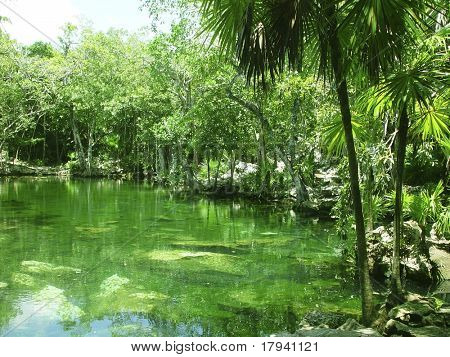cenote lake in Riviera Maya jungle mayan Quintana Roo