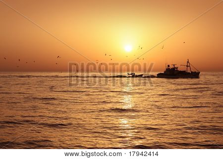 Fisherboat professional sardine catch fishery sunrise backlight with seagulls flying