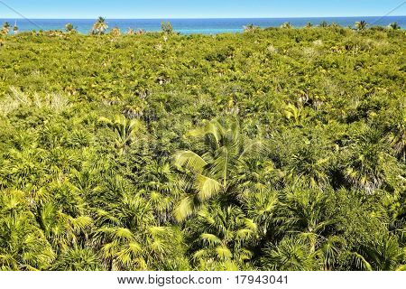 tropical palm tree jungle in Sian Kaan near Tulum