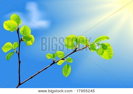 Vector branch of green beech leaves on blue background.Realistic vector. Eps10