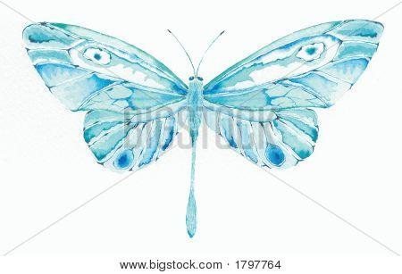Türkis Butterfly