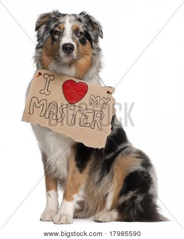 Australian Shepherd dog, 10 months old, sitting in front of white background with sign