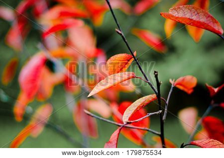 red autumn leaves with green blurred background